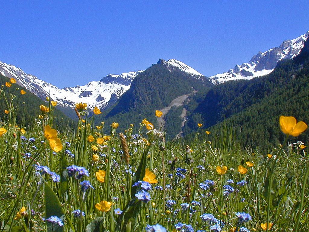 Stylisé paysage de montagne du Colorado Wolf Lake 6